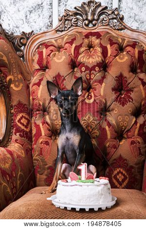 Birthday celebration for small dog. Party tasty cake for favorite pet