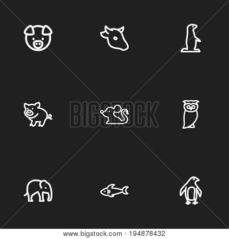 Set Of 9 Editable Zoology Icons. Includes Symbols Such As Predator, Pork, Gopher And More. Can Be Used For Web, Mobile, UI And Infographic Design.