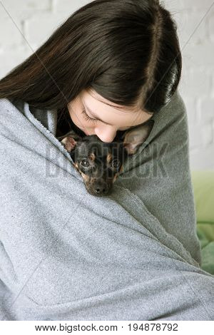 Owner friendship with small puppy. Single woman cuddling Toy Terrier