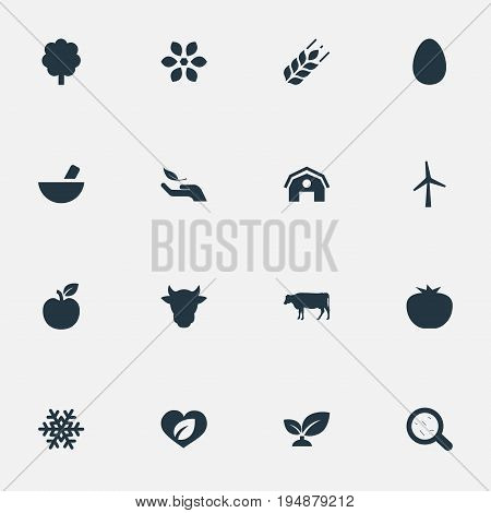 Vector Illustration Set Of Simple Nature Icons. Elements Forest, Easter, Bacteria And Other Synonyms Pounder, Tomato And Livestock.