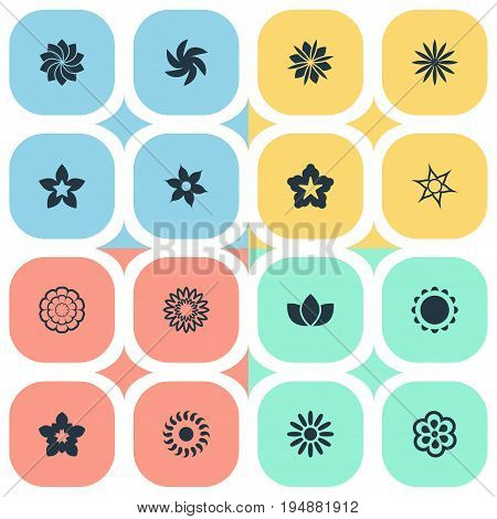Vector Illustration Set Of Simple Blossom Icons. Elements Cypress, Aloha, Gladioli And Other Synonyms Bloom, Laurel And Lilac.