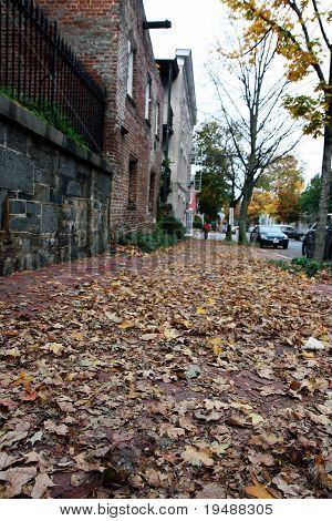 Autumn Trees On A Street In Washington