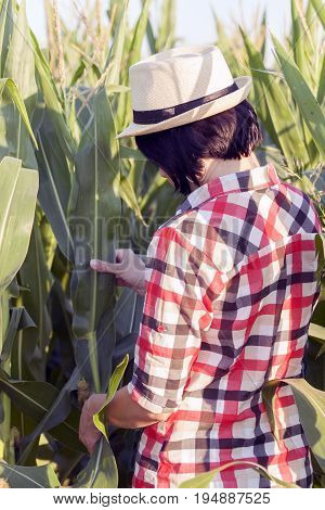 Woman Farmer Examines The Quality Of Corn