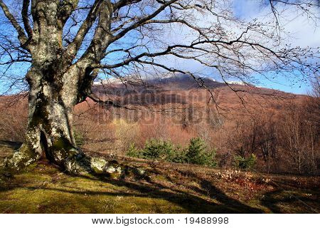 Spring mountains landscape. Tree, cloud and mountain
