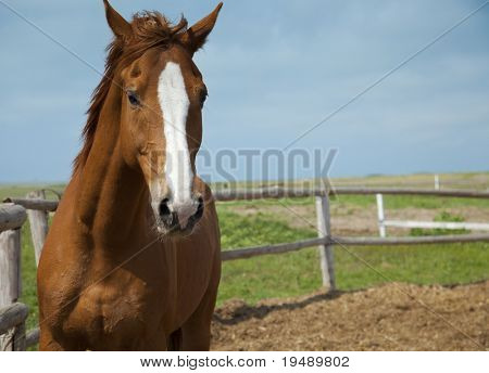 Horses portrait / farm  / blue sky and green grass