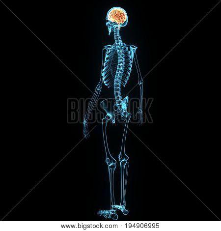 3d illustration of brain and skeleton anatomy