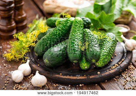 Fresh cucumbers and ingredients for canning, salt and herbs