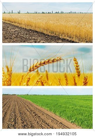 set of agricultural fields. spring and summer fields with crop