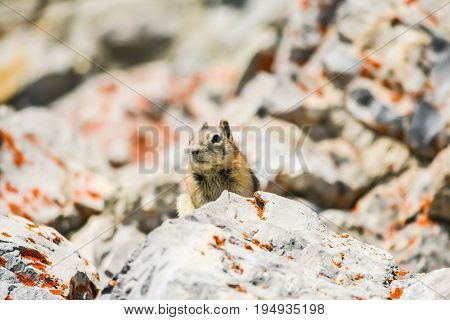 A Brown Squirrel on Top of an Open Rock