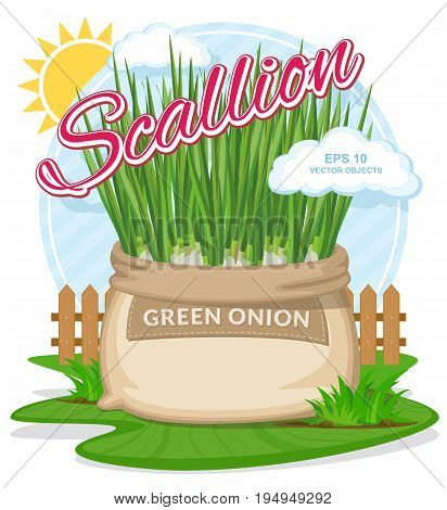 Vector illustration of eco products. Green onion in burlap sack. Full sacks with fresh vegetables. Bag with harvest on the summer garden. Harvesting and food concept