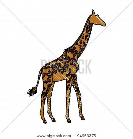 giraffe animal herbivore african wildlife vector illustration