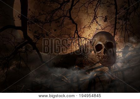 Human skull on old fence over dead tree moon and cloudy sky Mystery background Halloween concept