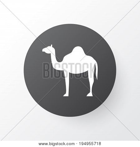 Camel Icon Symbol. Premium Quality Isolated Animal  Element In Trendy Style.
