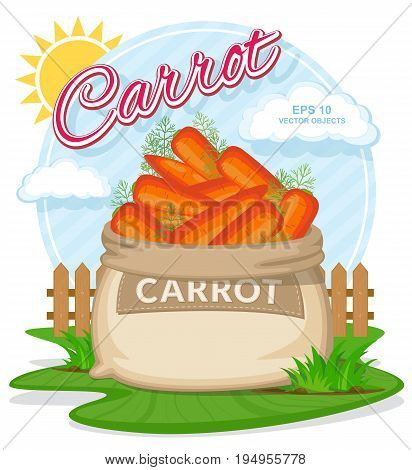 Vector illustration of eco products. Ripe Carrots in burlap sack. Full sacks with fresh vegetables. Bag with harvest on the summer garden. Harvesting and food concept