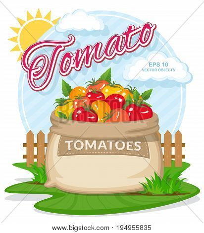 Vector illustration of eco products. Ripe Tomatoes in burlap sack. Full sacks with fresh vegetables. Bag with harvest on the summer garden. Harvesting and food concept