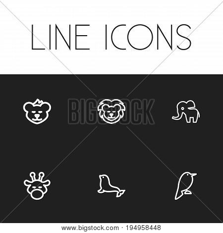 Set Of 6 Editable Zoo Icons. Includes Symbols Such As Cougar, Dogfish, Philomel And More. Can Be Used For Web, Mobile, UI And Infographic Design.