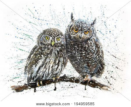 watercolor, owl, illustration, design, bird, art, wildlife, animal
