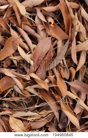 Pile of brown fallen leaves for use as background.