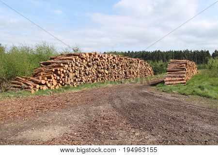 Two Stacks of Freshly Cut Pine Forestry Logs.