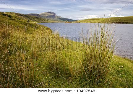 tussock at Loch Fada with Old Man of Storr in the background on Isle of Skye, Scotland