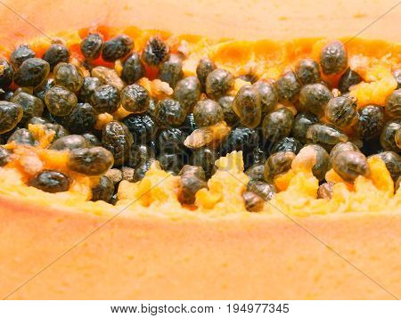 Close up of papaya seeds, selective focus, with its blur fruit flesh on foreground.