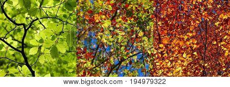 three seasons spring summer autumn in on photo