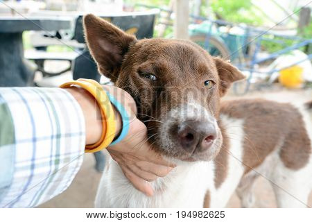 dog smile, hand of man caress little cute brown dog