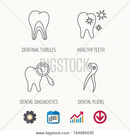 Healthy teeth, dentinal tubules and pliers icons. Dental diagnostics linear sign. Calendar, Graph chart and Cogwheel signs. Download colored web icon. Vector