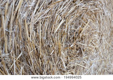 bundle of beveled straw close up texture