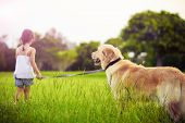 Young girl with golden retriever walking away into sun poster