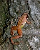 i found this frog hopping around one afternoon near my house. ** note: slight blurriness, best at smaller sizes poster