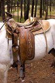 Horse Saddle on a white horse in chiapas mexico poster