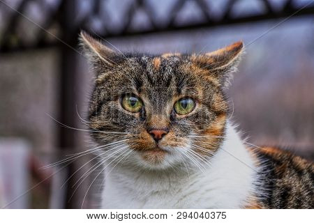 Cat suprised face. Cat looks at camera. Colorful kitten standing on wooden parapet and looks into garden. She watch something. Domestic moggie on watch poster