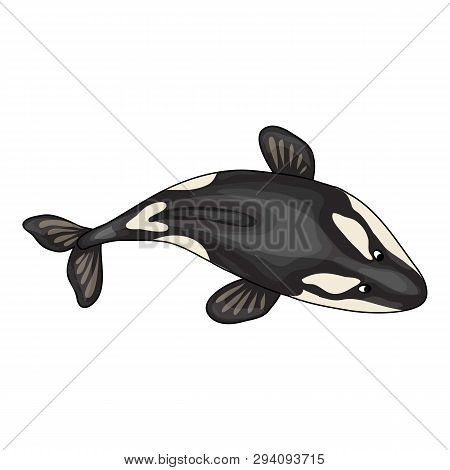 Top View Orca Whale Icon. Cartoon Of Top View Orca Whale Vector Icon For Web Design Isolated On Whit