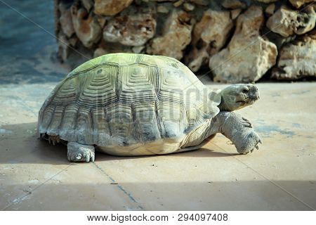 This Is A Portrait Of A Land Turtle