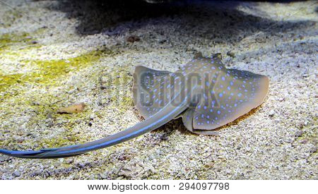 This Is A Detail, Close Up Of A Skate