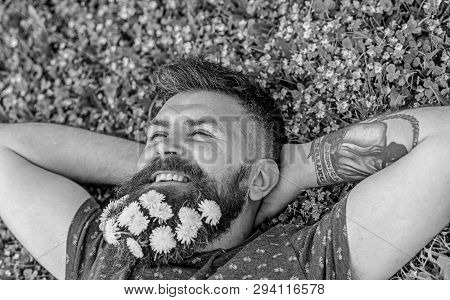 Breeziness Concept. Guy With Dandelions In Beard Relaxing, Top View. Bearded Man With Dandelion Flow