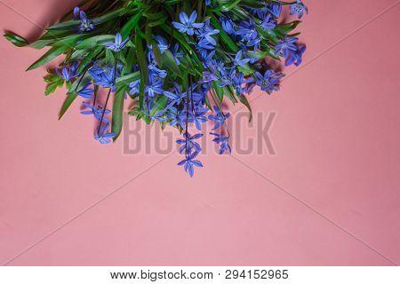 Spring Flower Landscape. Spring Blooming Spring Flowers On A Pink Background. Blue Flowers In Spring
