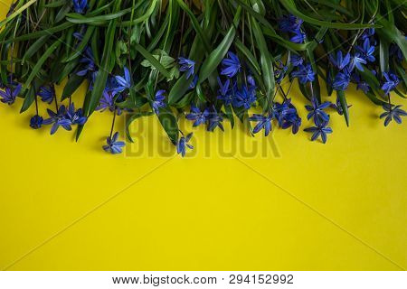 Spring Flower Landscape. Spring Blooming Spring Flowers On A Yellow Background. Flowers On Top. Blue
