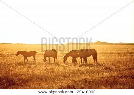 Some Horses Grazing