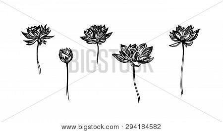 Hand Drawn Lotus Flowers Set, Outline Sketch. Vector Black Ink Drawing Isolated On White Background.