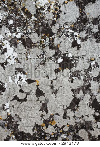 Gravestone With Lichens