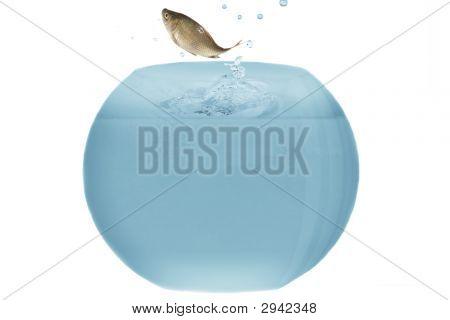 Jump From Aquarium