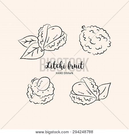 Litchi Fruit Drawing, Lychee. Sketch Of Litchi On A White Background. Vector Illustration