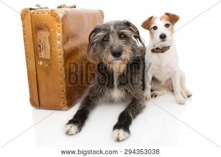 Two Dogs Going On Vacations Or Traveling.  Jack Russell And Sheepdog Next To A Vintage Suitcase. Iso