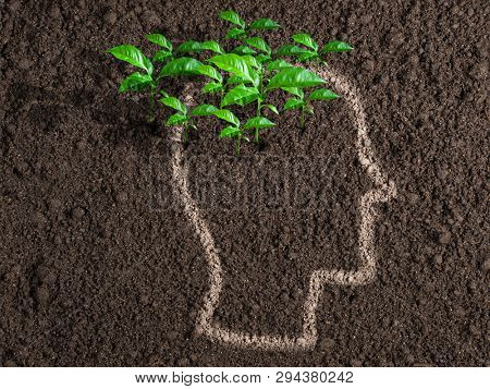 Ideas and initiative concept. Green leaves from human brain.