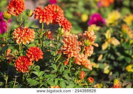 Spring Flower Landscape. Spring Blooming Flowers. Landscape Of Flowers. Copy Space