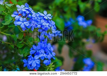 Blue Flowers. Blue Flowers In The Park. Spring Blue Flowers In The Forest. Spring Flowers Of Blue Co