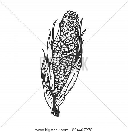 Corn Maize Vegetable Plant On Branch Sketch Engraving Vector Illustration. Scratch Board Style Imita