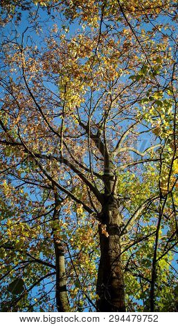 There Are Some Of Trees In Autumn